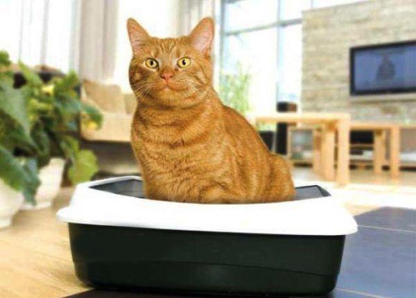 Mačka sedí v zásobníku