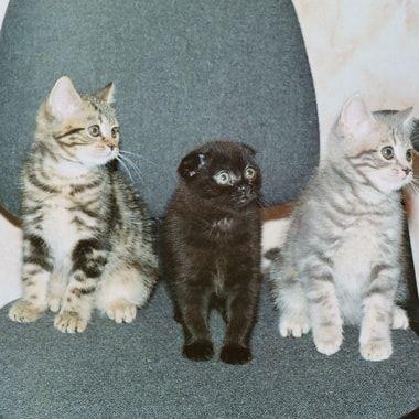 Kittens Sheila crin