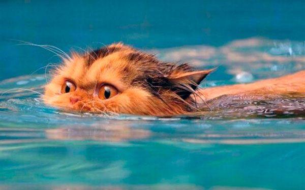 Mačky a voda: prečo domáce zvieratá majú strach z vodných procedúr
