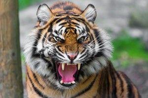Animale frumoase ale lumii