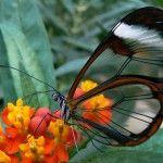 Красиви животни на света