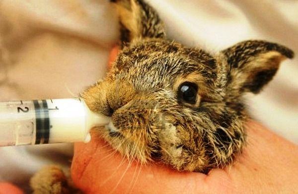 Králik nie je kŕmenie králikov - ako bude?