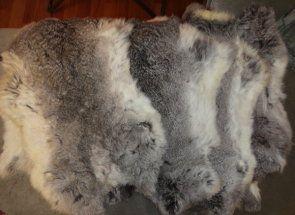 Haină de blană de iepure: excreta în mod corespunzător piei
