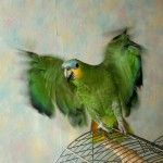 Amazon întinde aripile sale