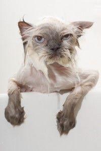 Котки за къпане