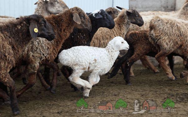 Hissar oi kurdjuchnogo