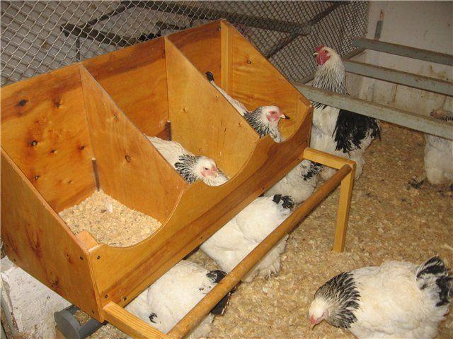 Cutie cu delimitatori pentru găinile ouătoare