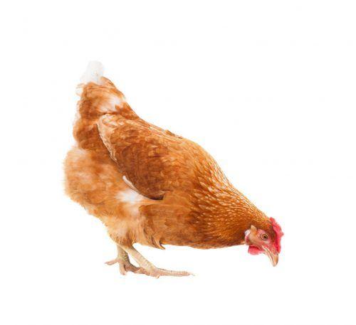 пилета Redbro