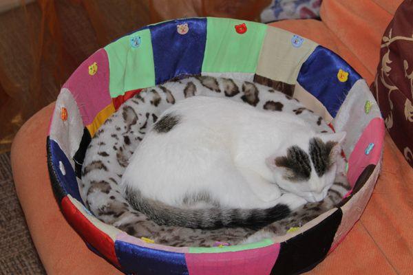 Деликатеси за котки Green Qzin Игривост