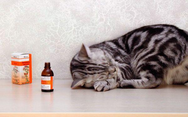 Liek alebo jed, prečo mačky ako valeriána
