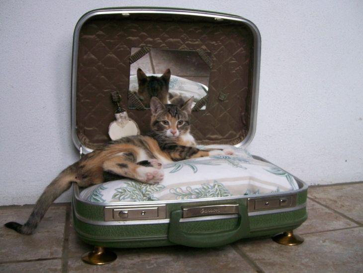 Легла за котки със собствените си ръце