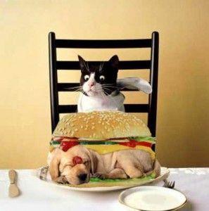 Любими лакомства за котки