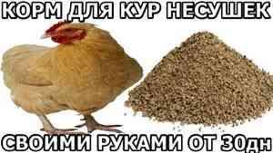 ALIMENTE pentru găini ouătoare HANDS proprii din 30dn - ZOLOTYERUKI - YouTube