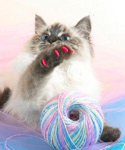 Маникюр за котки