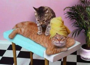 Masáž pre mačky