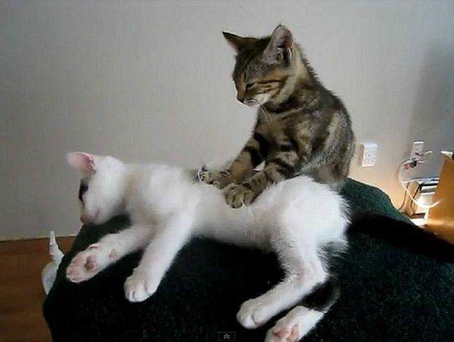 Ľudia, vytiahnutie ich mačky sú zdravšie a menej stresovaní.