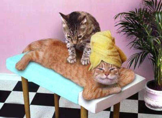 Masér pre mačky