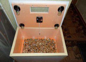 Master-class pentru a face un incubator pentru prepelițe
