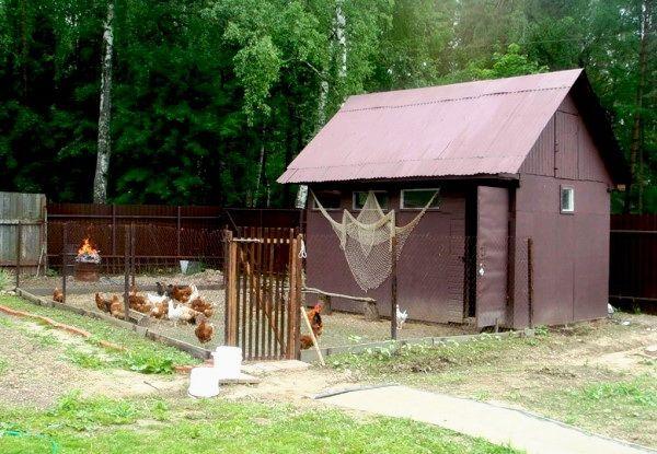 Un pui coop în grădină