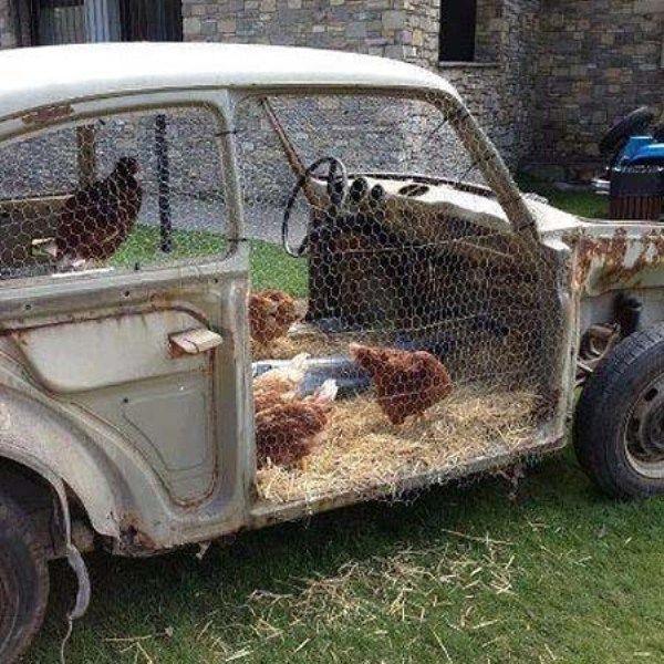 Casa de pui în mașină veche