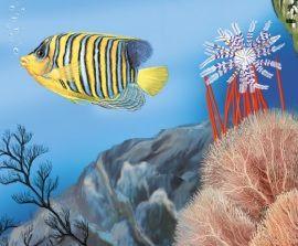 Životinje okeana