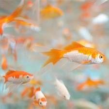Mini akvarij riba za male akvarije