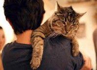 cat_u