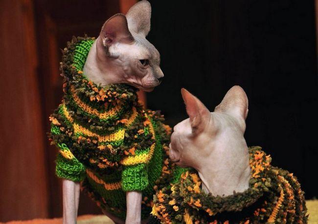 Oblečenie pre mačky začali prichádzať až v starovekom Egypte
