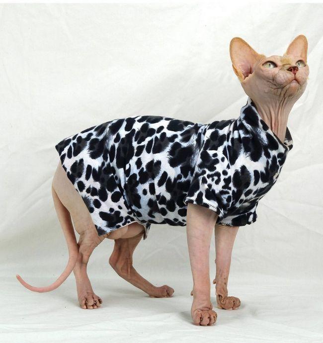 Cat šaty v súlade s požiadavkami módy