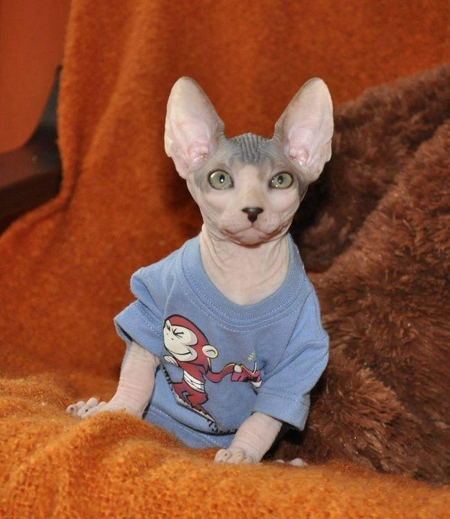 Teraz v obchodoch obrovský výber oblečenia pre mačky