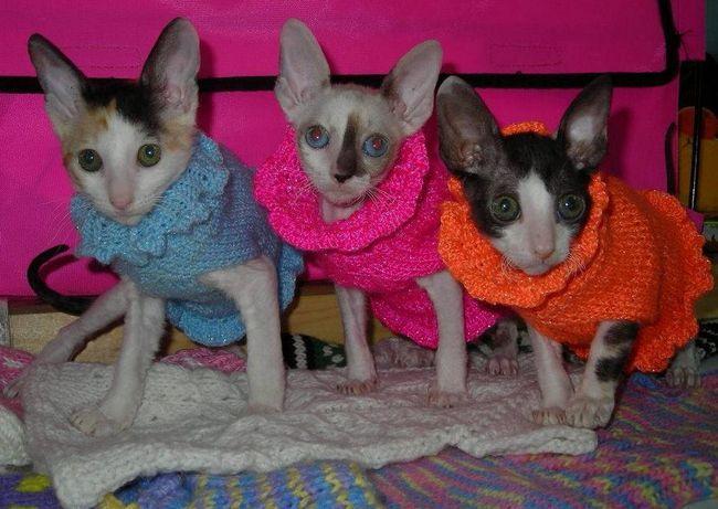 Pre ich malých zvierat, niektorí uprednostňujú pletené obleky vlastnými rukami
