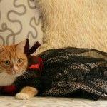 Červená mačka v čiernych šatách