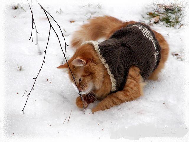 Pet v pletený sveter v snehu