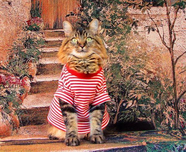 Mačka na verande v bunde