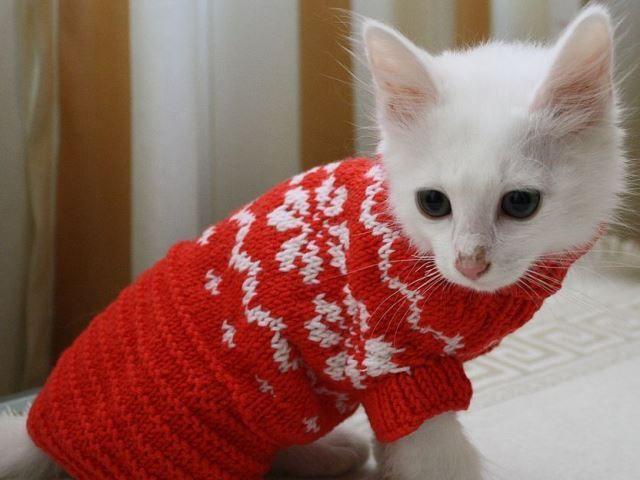 Biela mačička v červenom svetri pletený