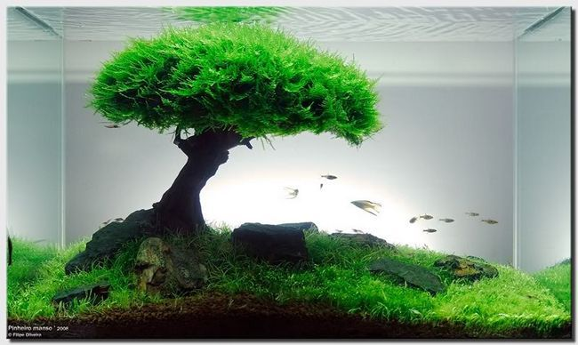 Moss u akvariju dekor