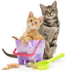 На вилата с котка