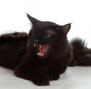 Cat изсъсква на никого