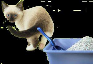 Пясък за котки