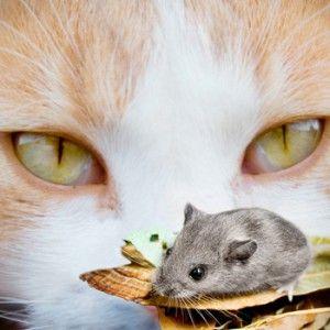 Prirodna hrana za mačke