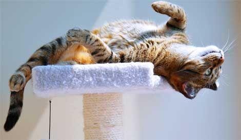 správanie mačiek