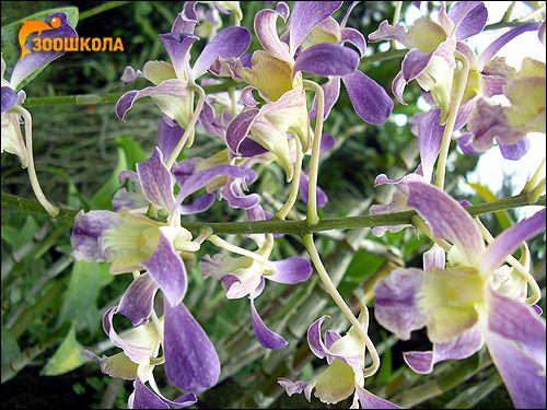 Orhideele. Orchid Park despre. Bali. Fotografii, fotografii de imagine flori