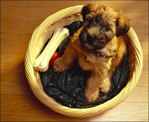 Šteňa v koši, Foto Dog Photo Image