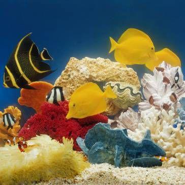 Nepretenciozan akvarij riba