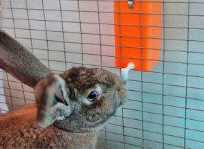 Nipple pojilice za zeca - rješenje napajanje životinja