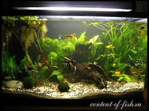 Nitrita i nitrata u akvariju