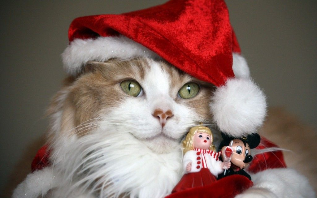 Коледа тапети с котки