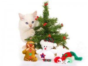 Нова Година с котка