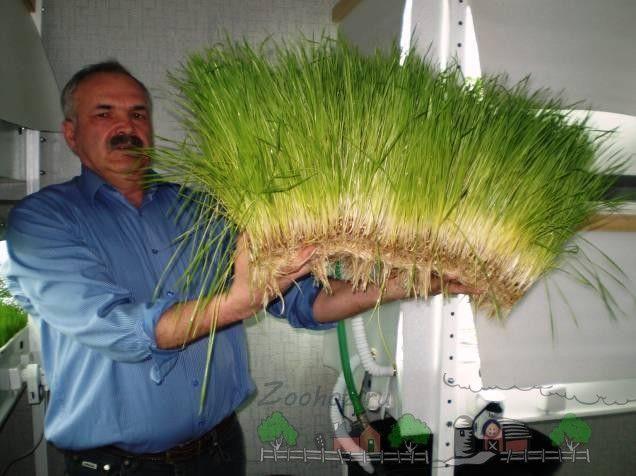 Verzii hidroponice în mâinile agricultorului
