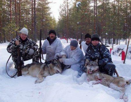 Battue lov vukova sa zastavama